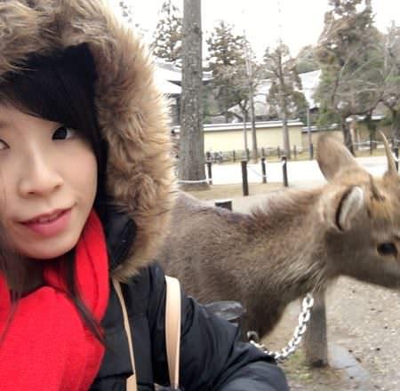 [ 2017一個人的京阪神 ] Day1-關西機場-奈良-在寒風冬雨中逛東大寺看濕漉漉的小鹿(斑比)