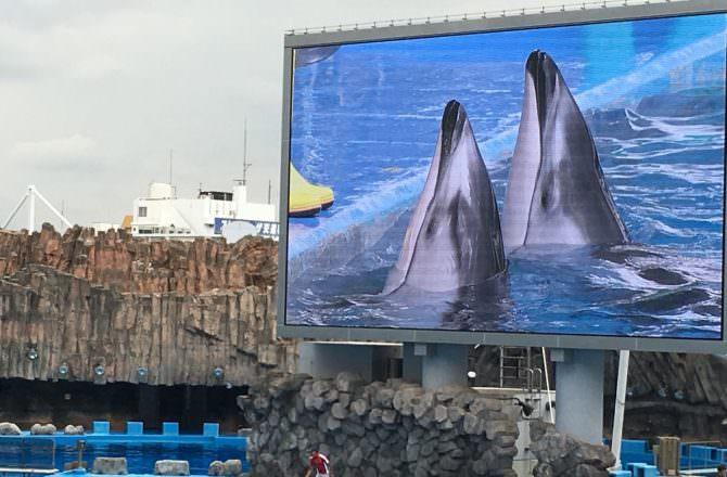 [ 2018夏,日本 ] Day2名古屋港水族館,名古屋必遊行程,海豚表演超精彩,自製珍珠項鍊超有趣~(內含票價資訊、交通方式)(圖多)