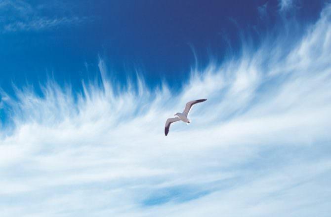 [ 芳療 ] 秋冬空汙大舉來襲,該如何用精油自我防護,避免寶貴的肺成為空氣清淨機?