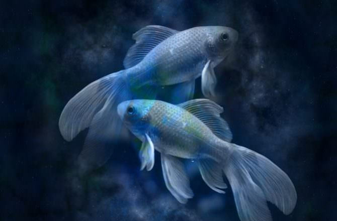 當精油遇上星座–雙魚座必須知道的精油秘密