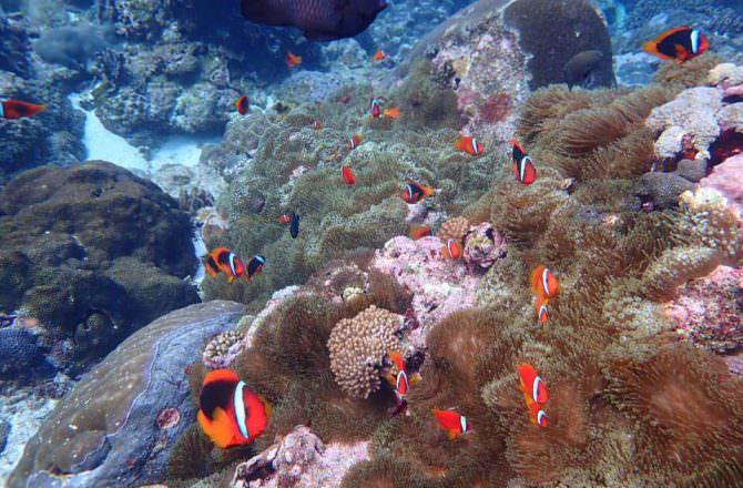 [ 綠島墾丁之旅 ] 柴口浮潛初體驗,海底景緻美不勝收令人難以忘懷,來綠島一定要體驗一次!